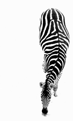 Black and whites-5